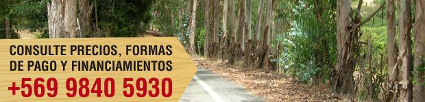parcelas forestas de melosilla