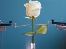 flores electronicas